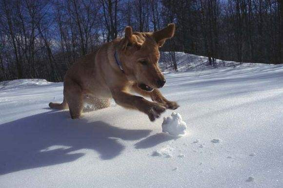 Dog Chasing Snow Ball